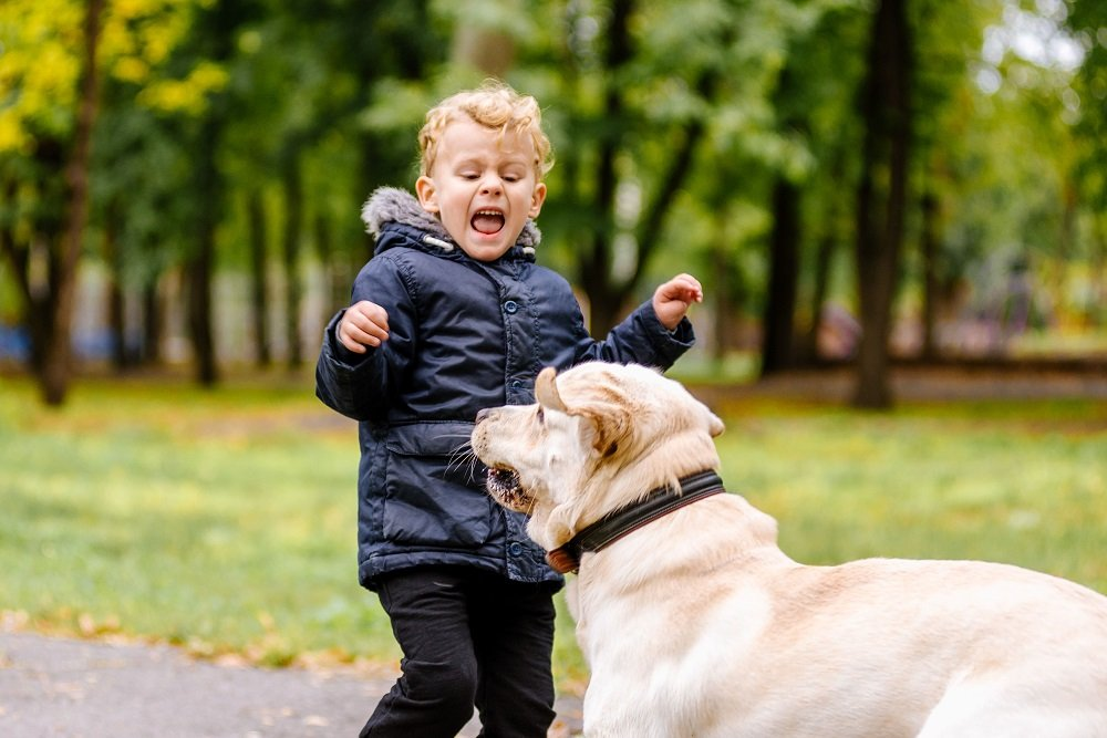 child attacked by a dog