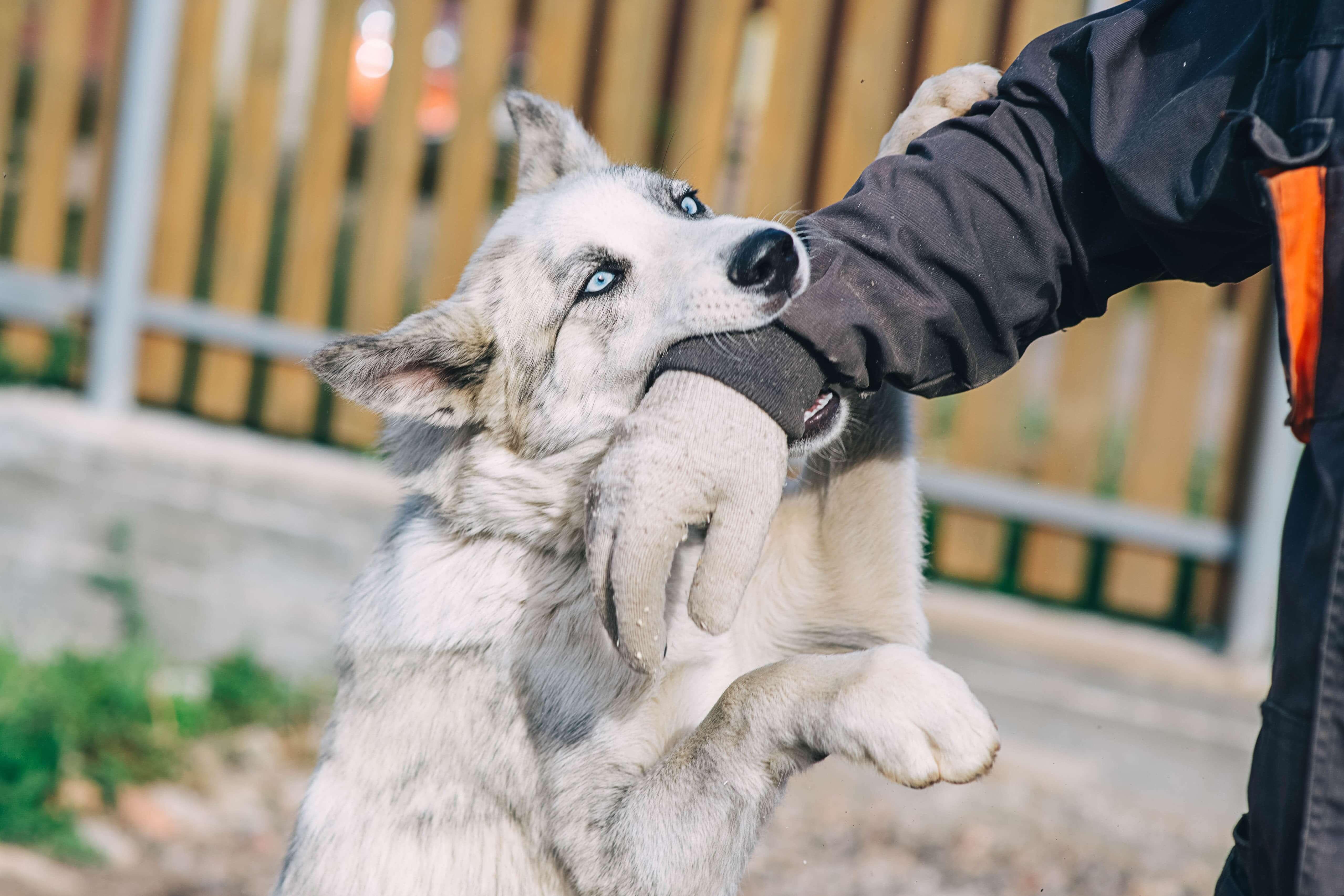 A dog bites a stranger's arm in Indiana.