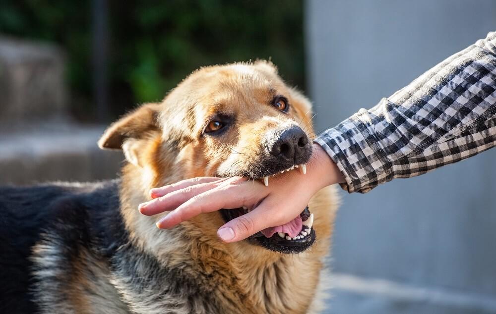 Aggressive dog biting on strangers arm.